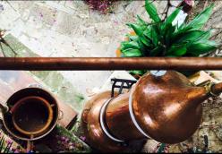 Destilación artesanal de Ciprés