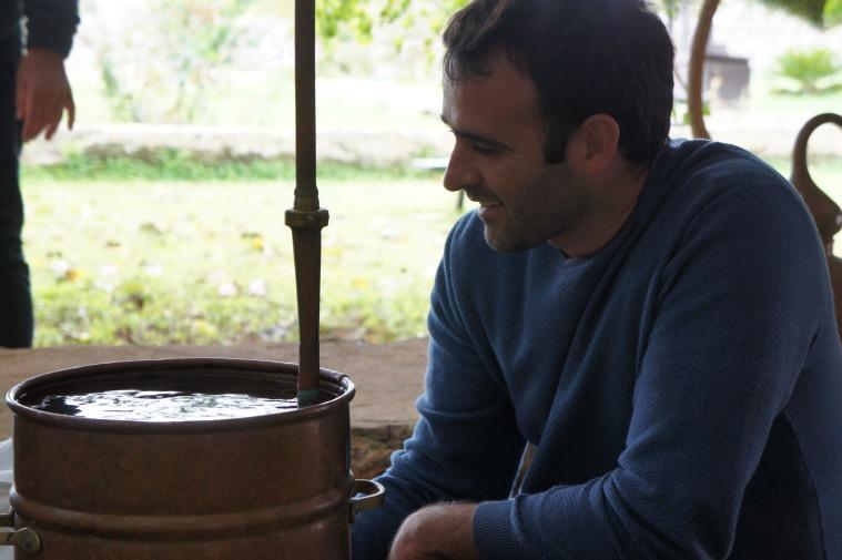 Destilación artesana del Mirto (Myrtus communis)