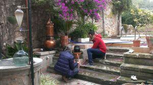 Ciprés y hiedra